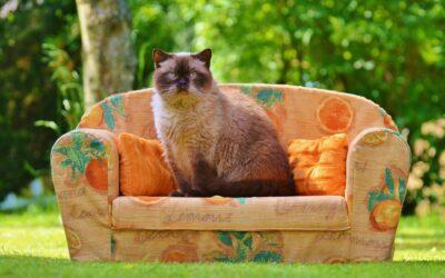 I divani industriali puntano sull'autentica qualità. I veri artigiani festeggiano