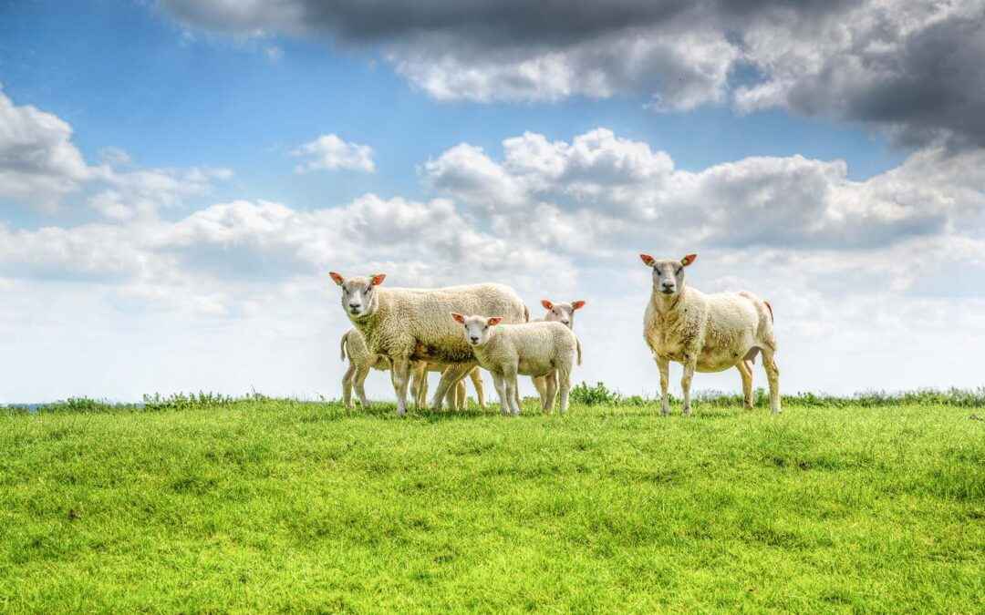 Assemblea dei pastori. Toscana, negli ultimi venti anni pastorizia crollata del 56% dei capi