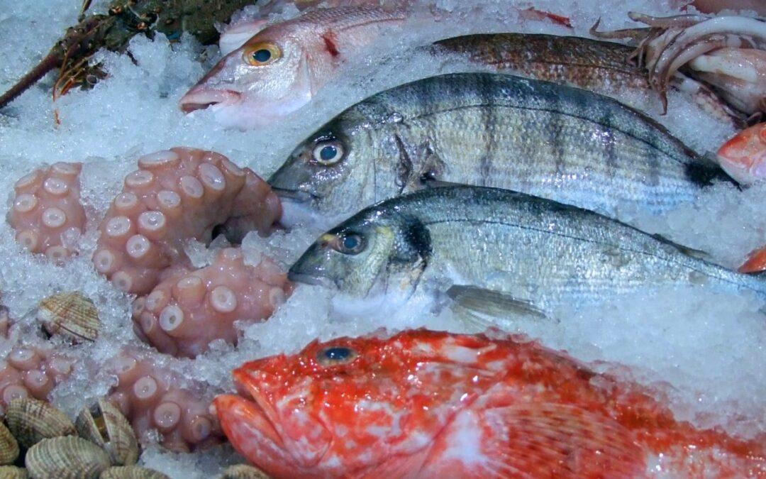 Toscana, tutela degli ecosistemi marini. Un progetto che coinvolge i pescatori