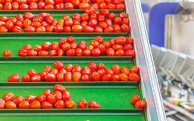 Scarlatto Due. Operazione dei Carabinieri per 821 tonnellate di pomodoro egiziano non conforme